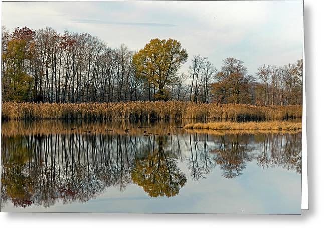 Bear Swamp Mirror Greeting Card by Jennifer Nelson