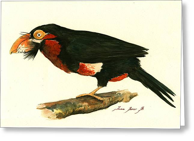 Bearded Barbet Greeting Card by Juan Bosco