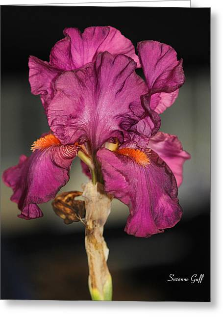 Bearded Iris Beauty Greeting Card