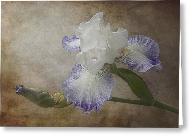 Bearded Iris Greeting Card