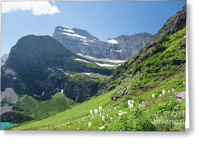 Beargrass - Grinnell Glacier Trail - Glacier National Park Greeting Card