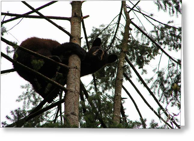 Bearly Hanging On Greeting Card by Nick Gustafson