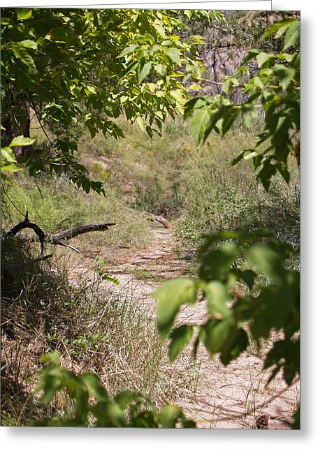 Beaten Path Greeting Card by James Granberry