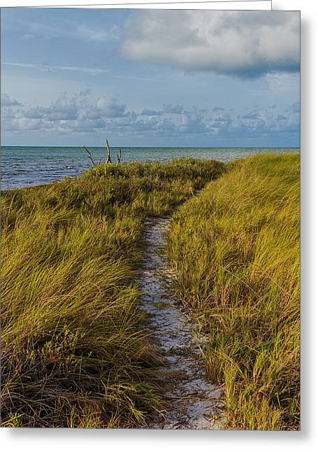 Beaten Path Greeting Card by Swank Photography