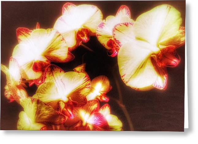 Greeting Card featuring the photograph Beautiful Orchid by Isabella F Abbie Shores FRSA