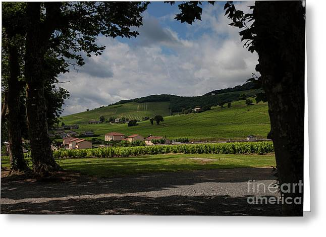 Beaujolais Vineyard Greeting Card