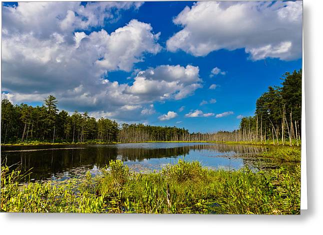 Greeting Card featuring the photograph Beautiful Afternoon In The Pine Lands by Louis Dallara