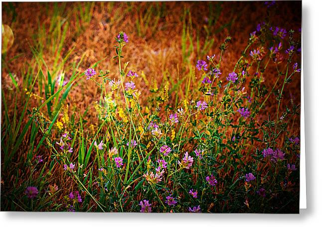 Beautiful Purples Greeting Cards - Beautiful And Wild Flowers Greeting Card by Christy Patino