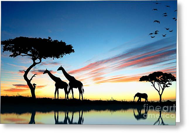 Beautiful  Animals In Safari Greeting Card