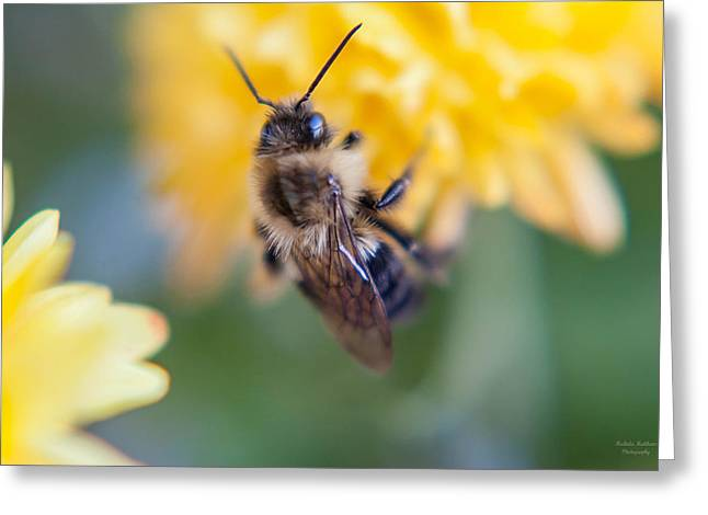 Beautiful Bee Greeting Card