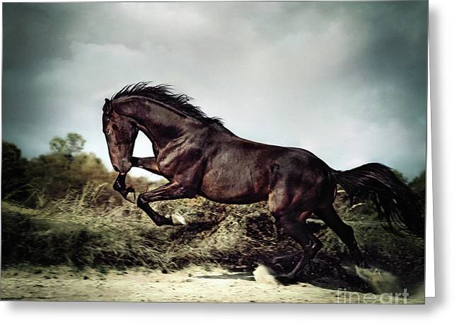 Beautiful Black Stallion Horse Running On The Stormy Sky Greeting Card