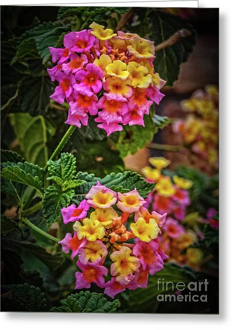 Beautiful Blooms Greeting Card by Robert Bales