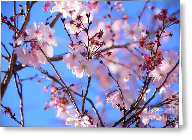Beautiful Blossoms Blooming  For Spring In Georgia Greeting Card