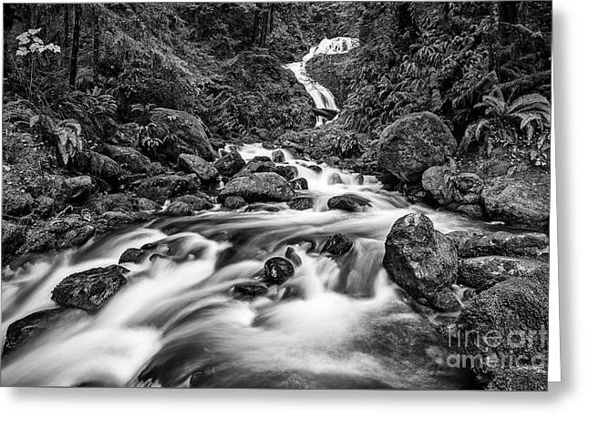 Beautiful Bunch Creek Falls In The Olympic National Park Greeting Card