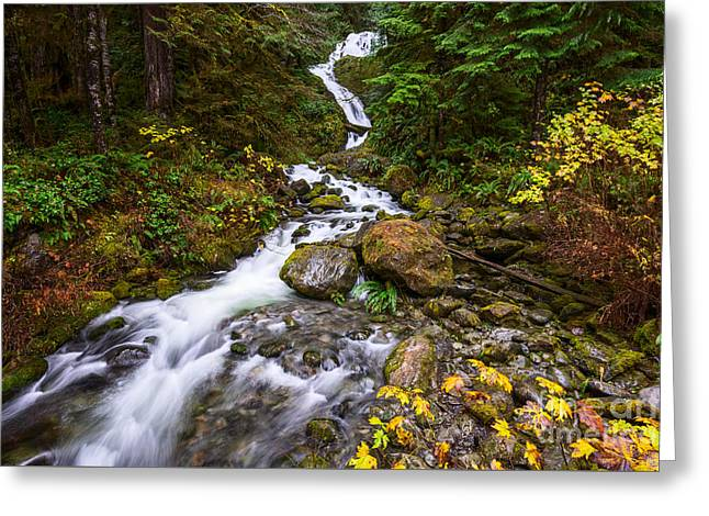 Beautiful Bunch Creek Falls In The Olympic National Park Of Wash Greeting Card by Jamie Pham