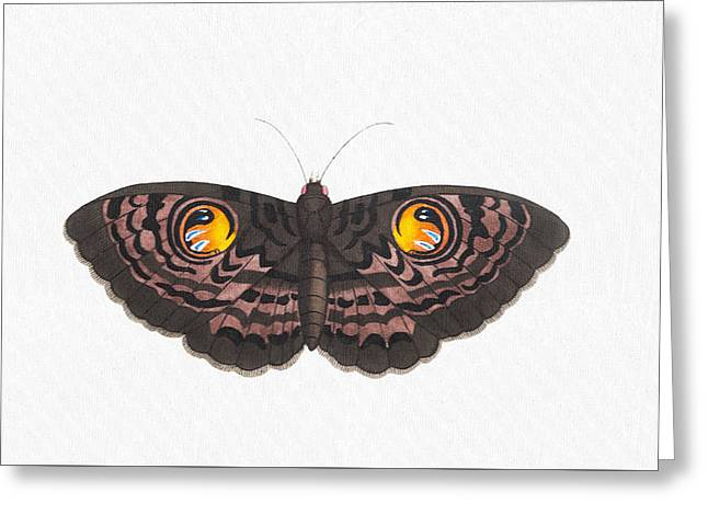 Beautiful Butterfly Art - Colorful Ox-eye Moth Butterfly Greeting Card