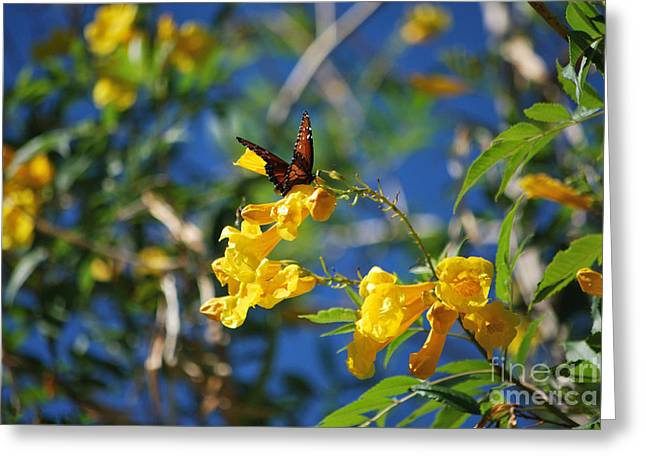 Beautiful Butterfly Greeting Card by Donna Greene