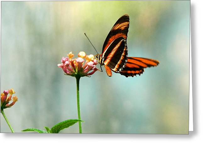 Beautiful Butterfly Greeting Card by Laurel Powell