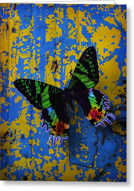 Beautiful Butterfly On Painted Wall Greeting Card by Garry Gay
