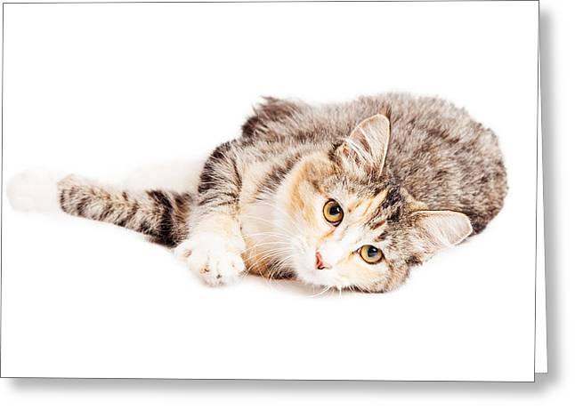 Beautiful Calico Kitty Laying Looking Forward Greeting Card by Susan Schmitz