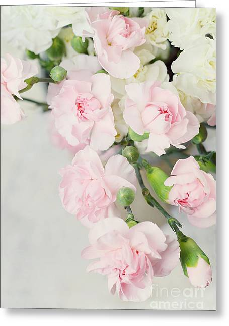 Beautiful Carnations Greeting Card by Stephanie Frey