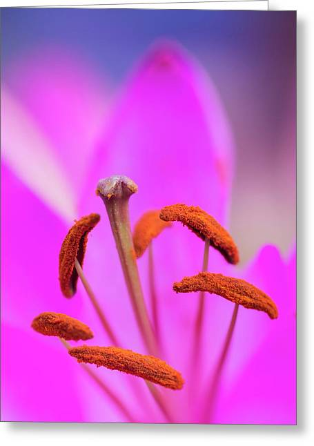 Beautiful Close Up Macro Image Of Vibrant Colorful Lily Flower Greeting Card