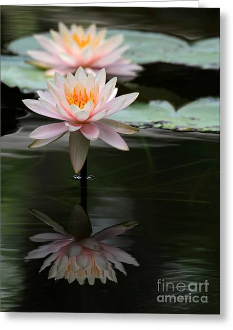Beautiful Colorado Water Lilies Greeting Card