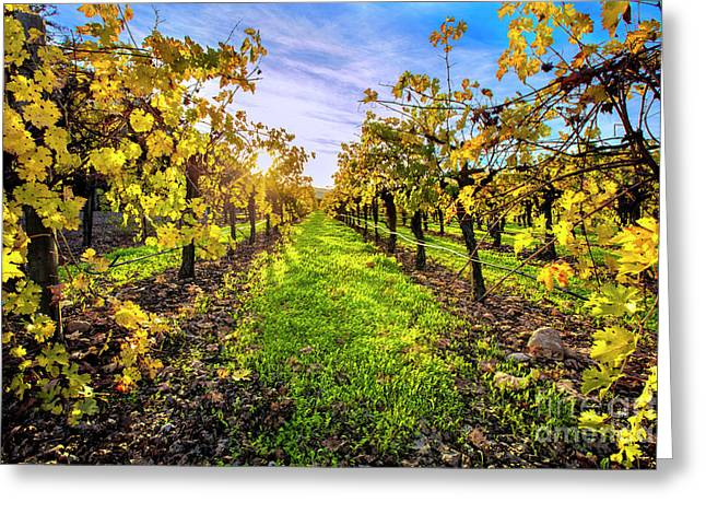 Beautiful Colors On The Vines Greeting Card by Jon Neidert