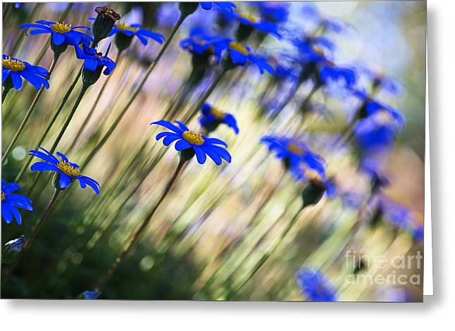 Beautiful Dancing Blue Flowers Romance Greeting Card