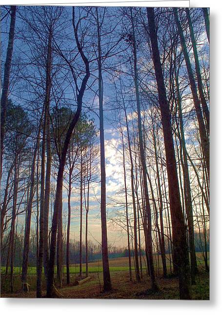 Beautiful Day Greeting Card by Beverly Hammond