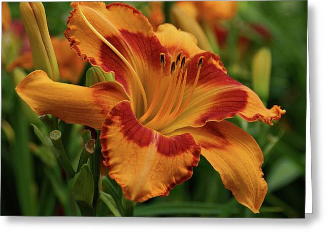 Greeting Card featuring the photograph Beautiful Daylily by Sandy Keeton