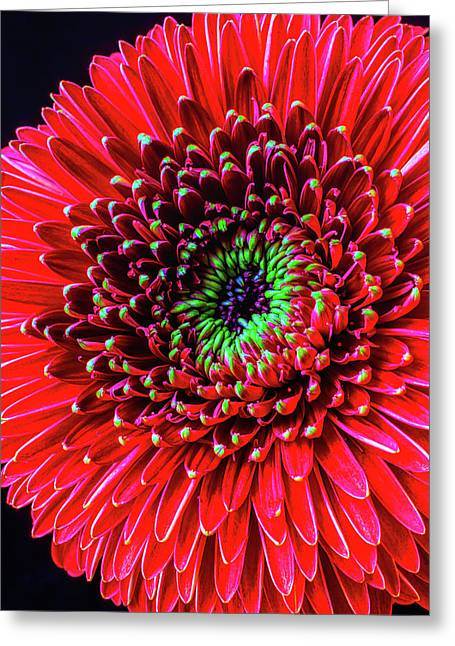 Beautiful Details Of Gerbera Daisy Greeting Card by Garry Gay