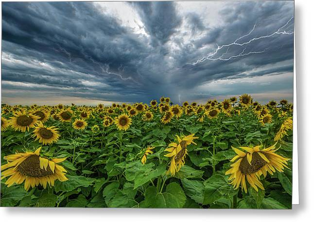 Beautiful Disaster  Greeting Card by Aaron J Groen