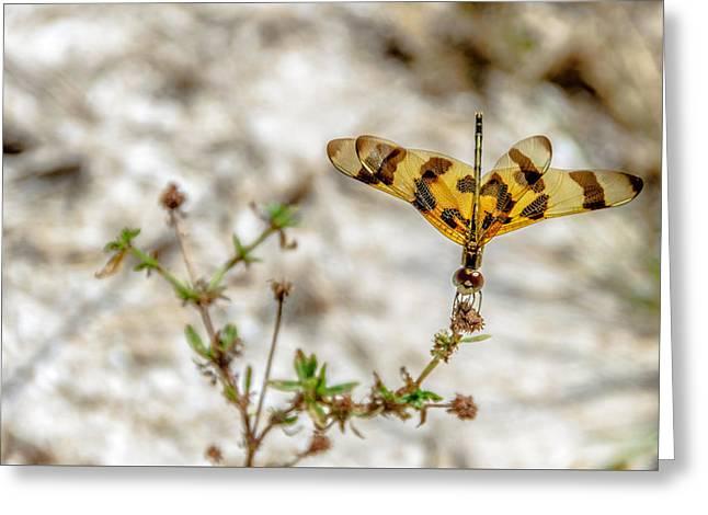 Beautiful Dragonfly Greeting Card