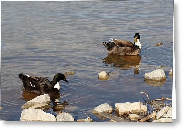 Greeting Card featuring the photograph Beautiful Ducks by Todd Blanchard