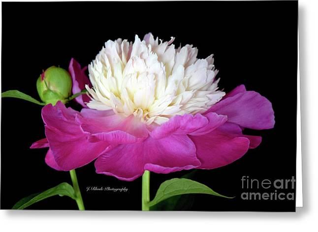 Beautiful Fancy Peony Greeting Card by Jeannie Rhode
