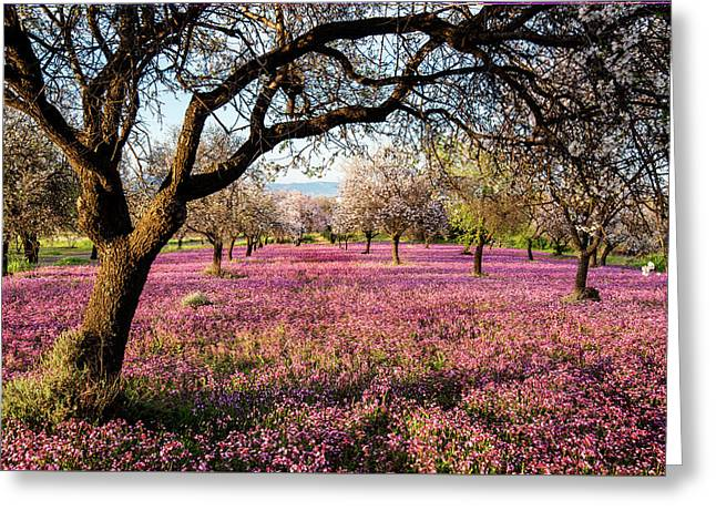 Greeting Card featuring the photograph Beautiful Field With Purple Veil Of Flowers In The Ground. by Michalakis Ppalis