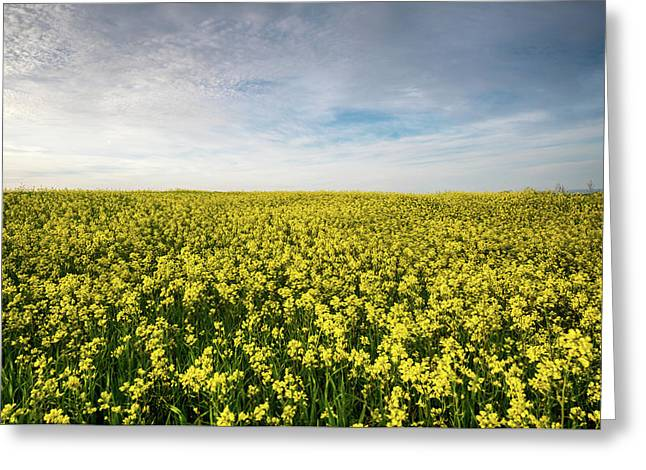 Greeting Card featuring the photograph Beautiful Field With Yellow Flowers In Spring by Michalakis Ppalis