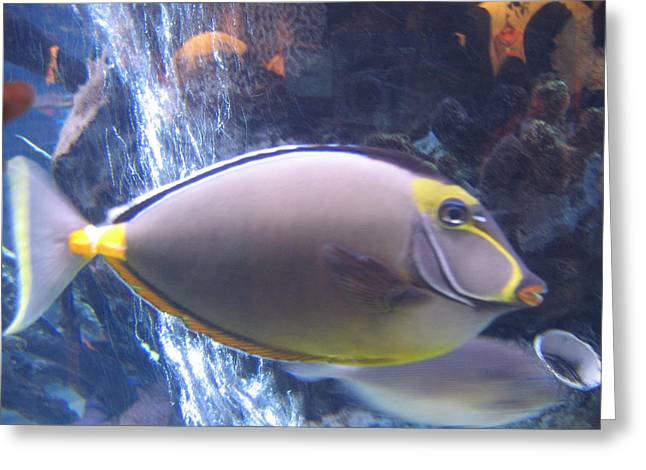 Greeting Card featuring the photograph Beautiful Fish by Suhas Tavkar