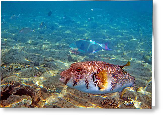 Beautiful Fish. Underwater World.  Greeting Card by Andy Za