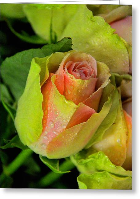 Beautiful Flower. Greeting Card by Andy Za