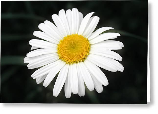 Beautiful Flower Greeting Card by Milena Ilieva