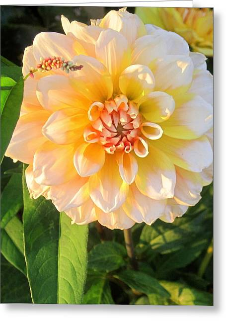 Beautiful Flower Greeting Card
