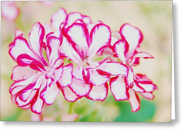 Beautiful Flowers Greeting Card by Alicia Morales