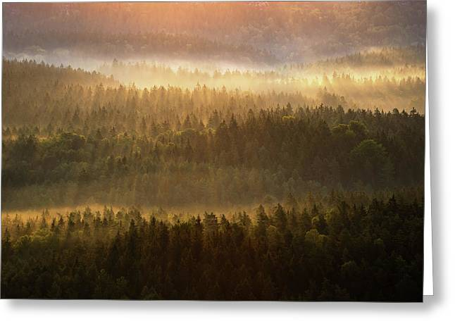 Beautiful Foggy Forest During Autumn Sunrise, Saxon Switzerland, Germany Greeting Card