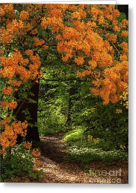 Beautiful Garden Canopy Of Azaleas Greeting Card by Mike Reid