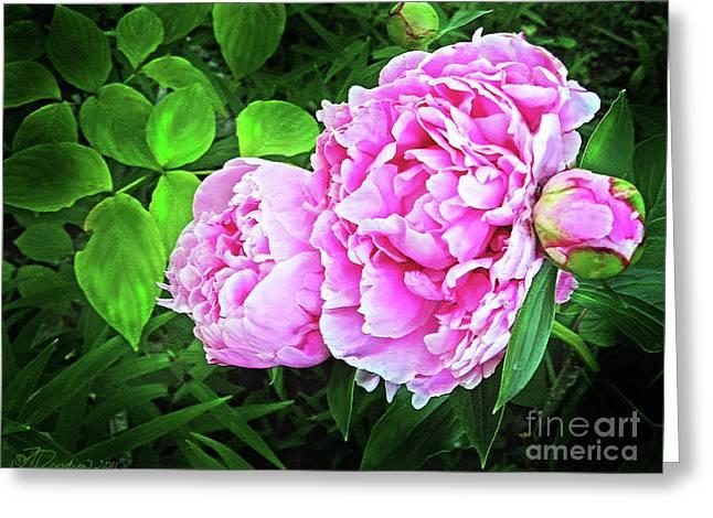 Beautiful Garden Peony Greeting Card by Patricia L Davidson
