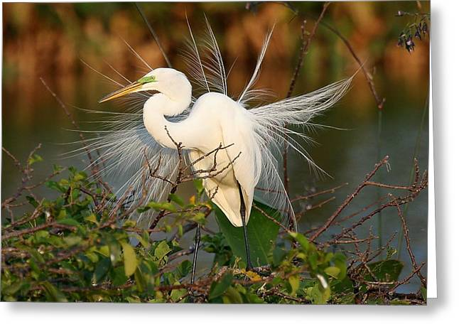 Beautiful Great White Egret At Dusk Greeting Card