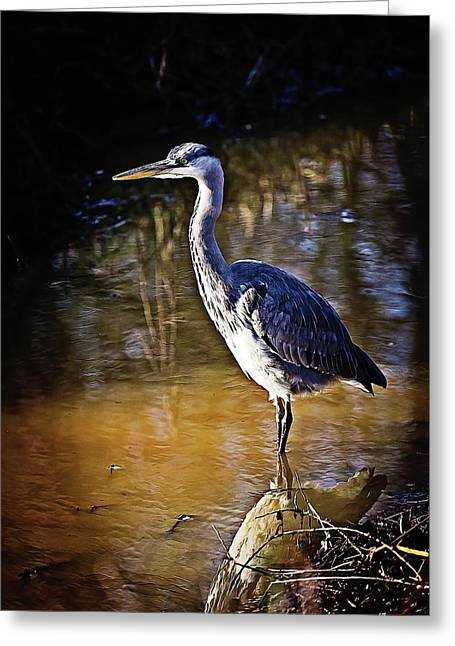 Beautiful Heron Standing In The Water Greeting Card