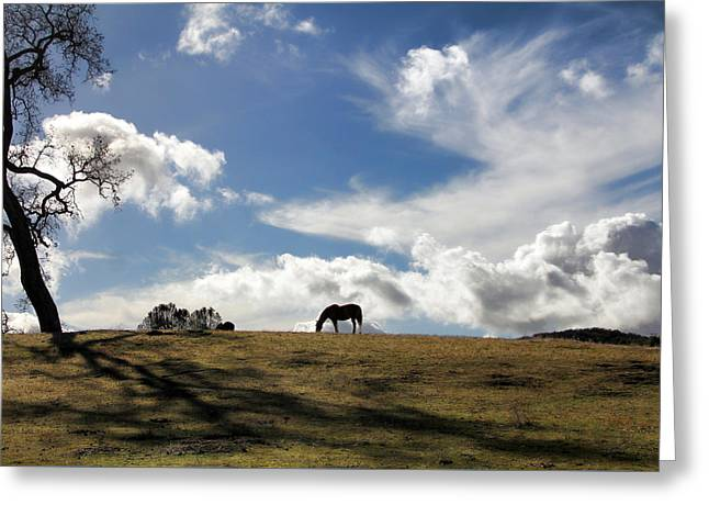 Beautiful Horse And Meadow Greeting Card